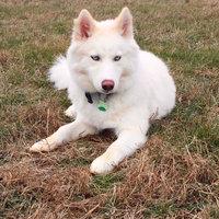 Dingo USA Dingo Munchy Stix 50pk 15.5oz uploaded by Tara N.