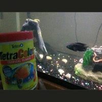 Tetra Tetracolor Tropical Flakes Fish Food uploaded by Annella T.