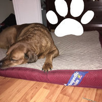 Top Paw Double Orthopedic Pet Bed uploaded by Jacqueline V.