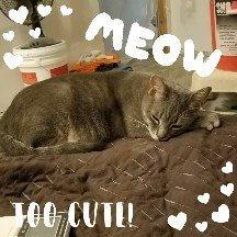 Photo of ASPCA uploaded by Amanda L.