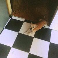 Pedigree Complete Nutrition Dog Food - Adult, 3.5 lb uploaded by Florevelyn z.