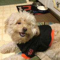 Hunter Manufacturing San Francisco Giants Dog Jersey Small Hunter Manufacturers uploaded by Liana L.
