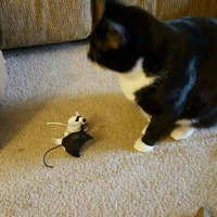 STAR WARS Darth Vader & Stormtrooper Mice Cat Toys, Pack of 2 uploaded by Emily I.
