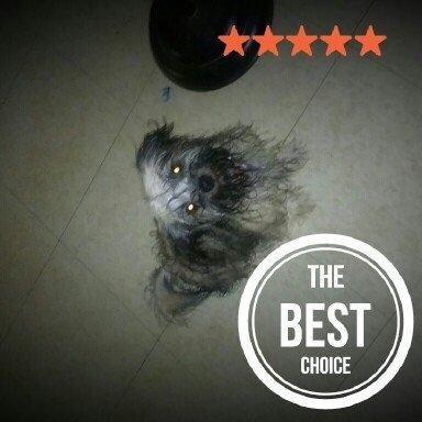 T Bonz Dog Treats uploaded by Heather R.