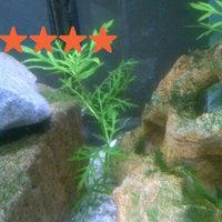 Mars Fishcare North America Leaf Zone Aquarium Plant Food uploaded by Ely L.
