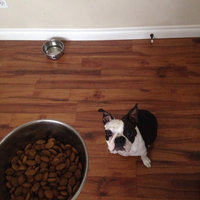 Nutro® Rotations™ Adult Salmon & Barley Recipe Dog Food 4 lb. Bag uploaded by Carrie S.