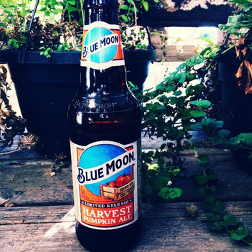 Photo of Blue Moon Seasonal Collection Harvest Pumpkin Ale uploaded by Shelby B.
