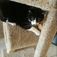Whisker CityA City Hotel Cat Tree uploaded by Bailey M.