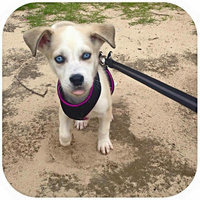 Top Paw Dog Harness uploaded by Maegan G.