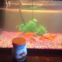 Aqueon Goldfish Granules (5.8 oz.) uploaded by shaid h.