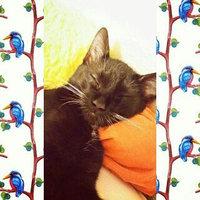 Hartz Ultra Guard Pro Flea & Tick Drops for Cats 5lbs - 3 CT uploaded by Aly L.