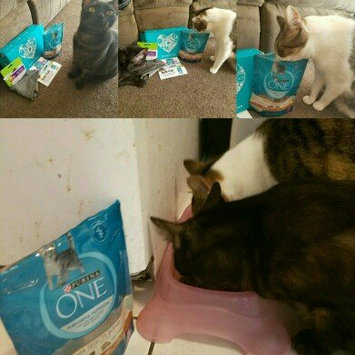 Purina ONE® Dry Food uploaded by Monica L.
