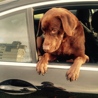Royal Canin Breed Health Nutrition Labrador Retriever Adult Dry Dog Food 5.5 lb. Bag uploaded by Mariam B.