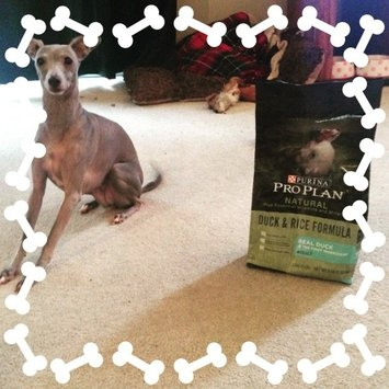Purina Pro Plan Natural Adult Duck & Rice Formula Dog Food 4 lb. Bag uploaded by Amanda R.