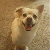 Cesar Select Canine Cuisine - Filet Mignon uploaded by Taylor J.