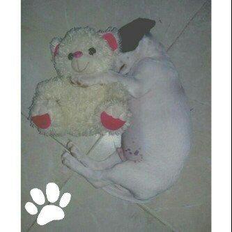 Photo of Flexi Expression Retractable Belt Dog Leash, Medium/Large, 16-Feet Long uploaded by Yanireth O.