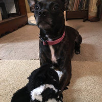 SPOT Skinneeez Stuffing Free Dog Toy uploaded by Teran F.