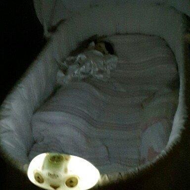 Delta Children Sweet Beginnings Bassinet, Turtle Dove uploaded by Erica S.