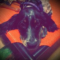 Nylabone Dura Chew Dog Bone Petite Chicken 1 Bone uploaded by Rachel S.
