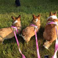 Four Paws Comfort Control Harness Blue Large uploaded by Lindsey T.
