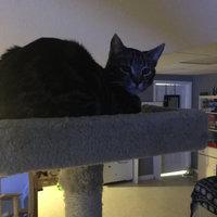 Majestic Pet-Majestic Casita Cat Tree uploaded by Krystal J.