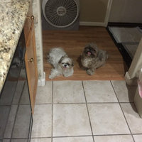 Royal CaninA Shih Tzu Puppy Food uploaded by Vannie T.