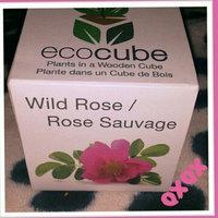 Ecocube Wild Rose uploaded by carly k.