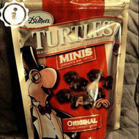 Demet's Turtles Minis Original uploaded by Angela P.