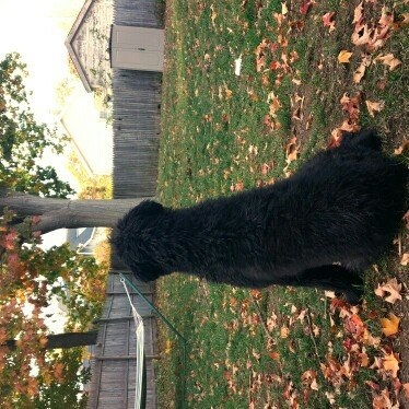 Blue Buffalo BLUE WildernessTM Grain Free Large Breed Puppy Food uploaded by Amanda L.