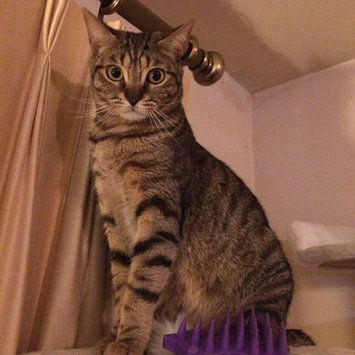 Photo of KONGA ZoomGroom Cat Brush uploaded by Tiffany D.