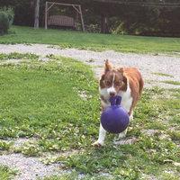 Jolly Pets Tug-N-Toss Ball uploaded by Jennifer W.