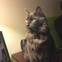 Purina Pro Plan Focus Adult Urinary Tract Health Formula Cat Food 7 lb. Bag uploaded by Jennifer R.