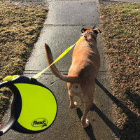 Flexi Neon Reflect Retractable Cord Leash uploaded by Brittany C.