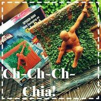 Chia Pet Spiderman, 1 ea uploaded by OnDeane J.