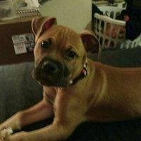 Purina Puppy Chow Natural Plus Vitamins & Minerals Dog Food 15.5 lb. Bag uploaded by Brenda L.