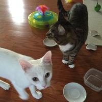 TEMPTATIONS® SNACKY MOUSE™ Cat Toy uploaded by Jordan P.