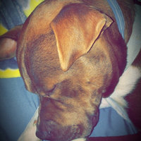 Seresto Flea & Tick Dog Collar uploaded by Jennifer M.
