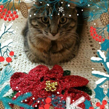 Photo of Fancy Feast Grilled Gourmet Cat Food uploaded by Molly K.