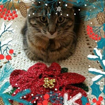 Fancy Feast Grilled Gourmet Cat Food uploaded by Molly K.