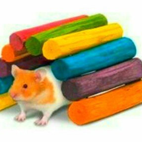 Super Pet Guinea Pig Tropical Fiddle Sticks Hideout - Medium uploaded by C W.