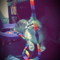 .CatDancer CatCharmer Interactive Cat Toy (4 long) uploaded by Regan G.
