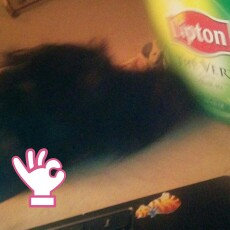 Lipton® Serve Hot or Iced Tea Bags uploaded by Chelsea P.
