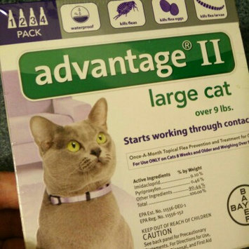 Photo of Advantage II Cat 9+ lbs, 4 Month, 4 ea uploaded by Devin O.