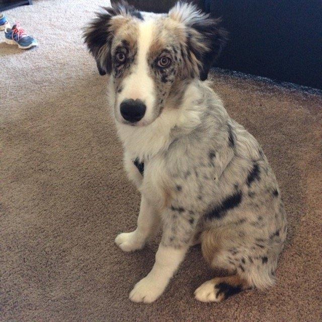 Majestic Pet Products, Inc. Majestic Pet Adjustable Nylon Dog Harness - Black Medium uploaded by Ashley P.