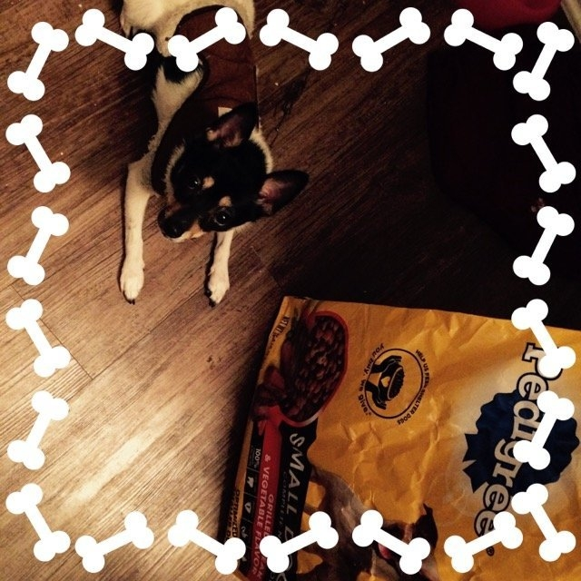 Pedigree Dog Food Small Dog Targeted Nutrition Steak & Vegetable uploaded by Vanessa R.