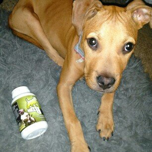 Photo of Bully Max The Ultimate Canine Supplement, 60 Tablets uploaded by Davonta J.