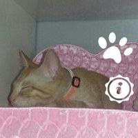 Purina Friskies Friskies Rise & Shine Dry Cat Food - 3.15 lb uploaded by Deb Q.