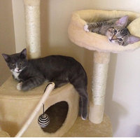Kitty Mansions Memphis Cat Tree uploaded by Ali W.