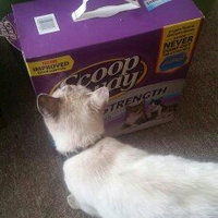 Scoop Away Scoopable Cat Litter Scented Extra Strength uploaded by Jessica F.