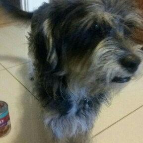 Photo of Alpo Dog Food uploaded by Alexandra R.